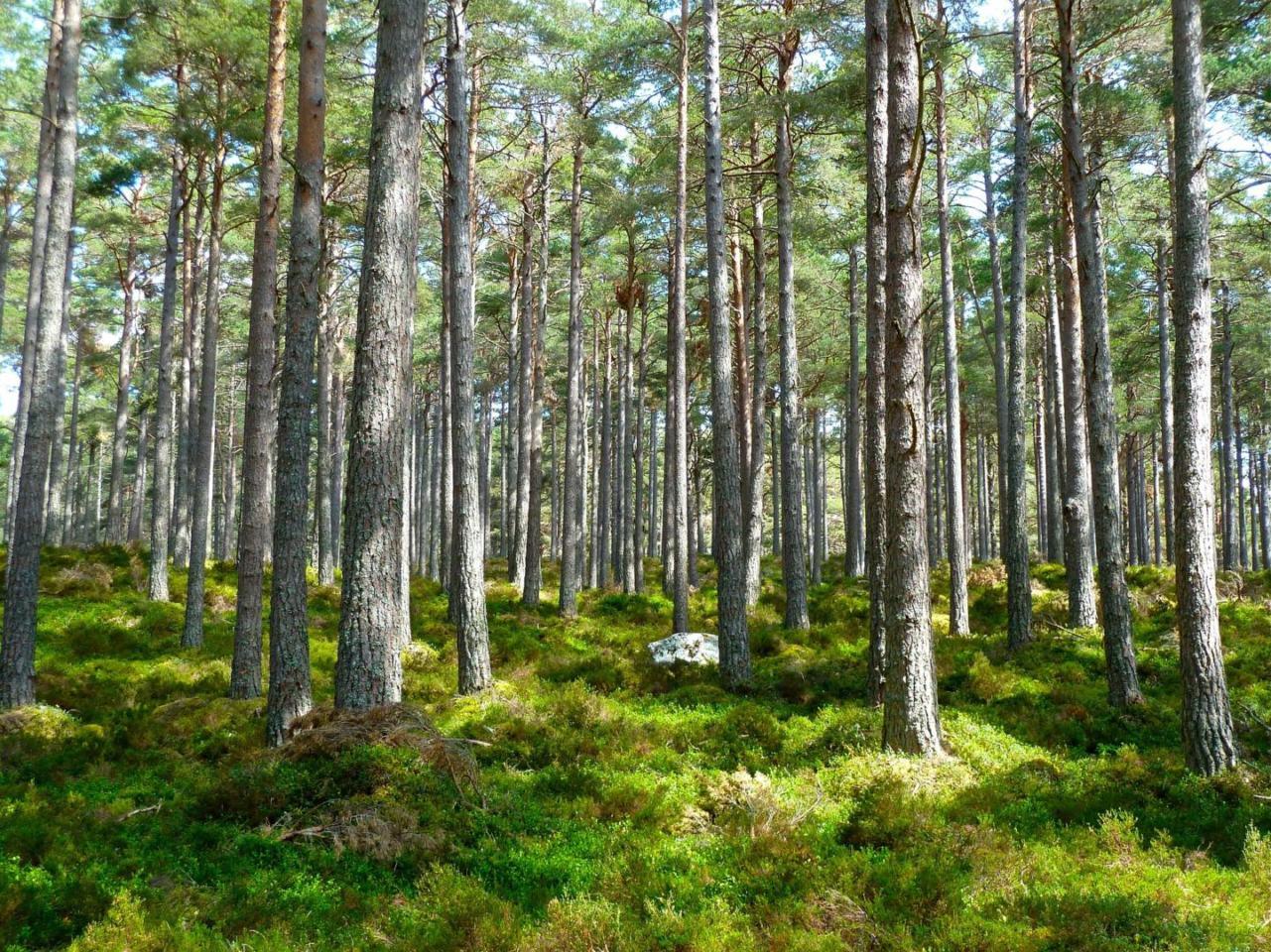 Crescendo gli alberi ci offrono il legno come materiale da costruzione